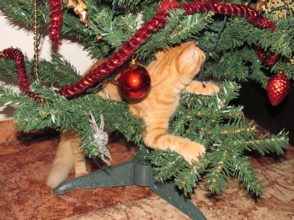 Voici comment/pourquoi mon arbre de Noël ne survivra pas la nuit...