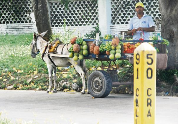 Un vendeur ambulant de fruits et légumes dans les rues de la Côte. Son équipage s'appelle