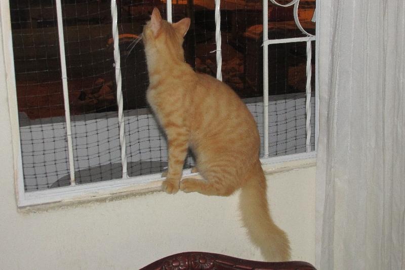 Puis-je m'échapper par la fenêtre ?