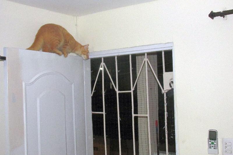 Ou bien grimper sur la porte ?!