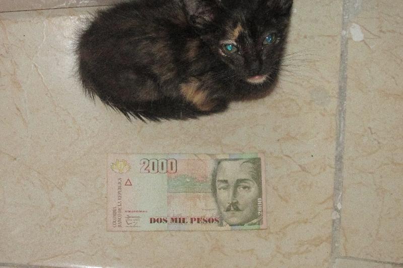 Un peu plus grande qu'un billet de 2.000 pesos...