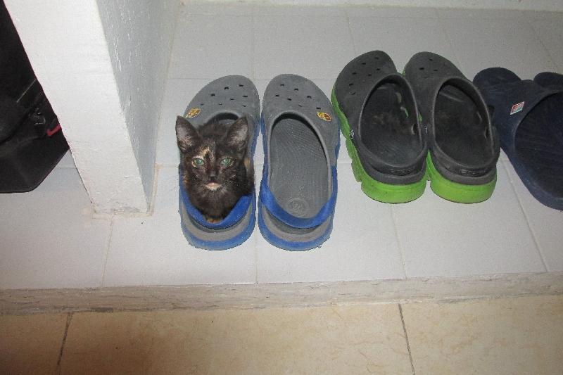 Elle tient dans l'une de mes chaussures !