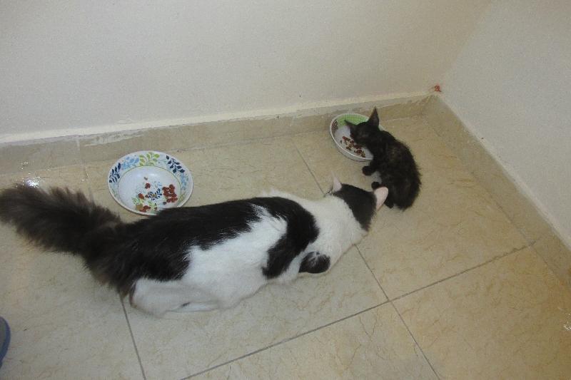 Comparaison de taille avec Domi, le dernier chat que j'ai recueilli (et il a moins d'un an) !