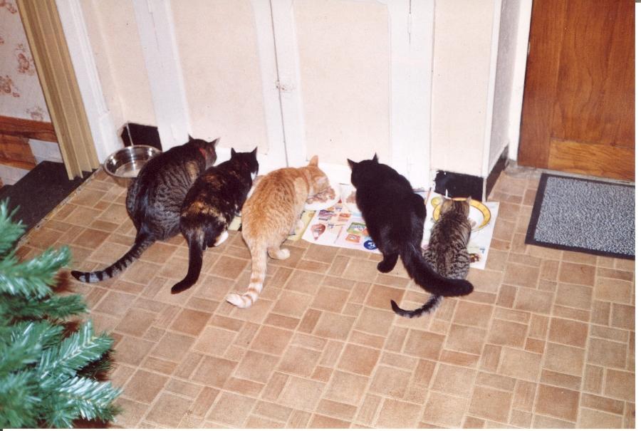 Cinq chats, cinq gamelles ! (Picaro est le second à partir de la droite)