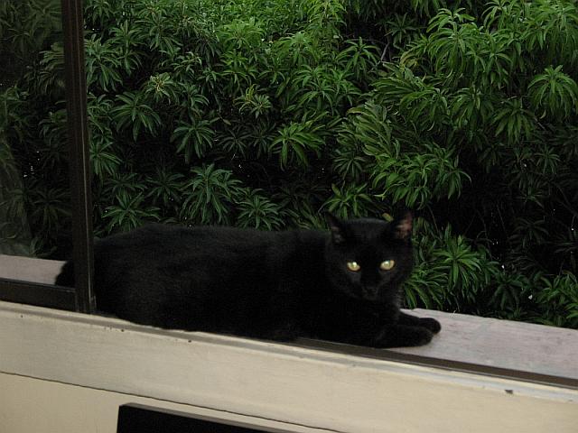 Pícaro sur un rebord de fenêtre